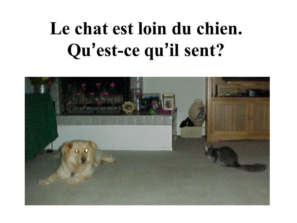 Le chat est loin du chien. Qu est-ce qu il sent?