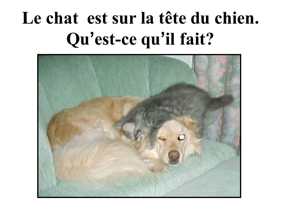 Le chat est sur la tête du chien. Qu est-ce qu il fait?