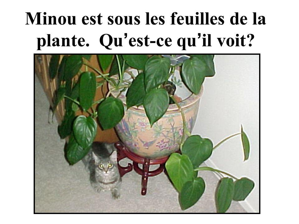 Minou est sous les feuilles de la plante. Qu est-ce qu il voit?