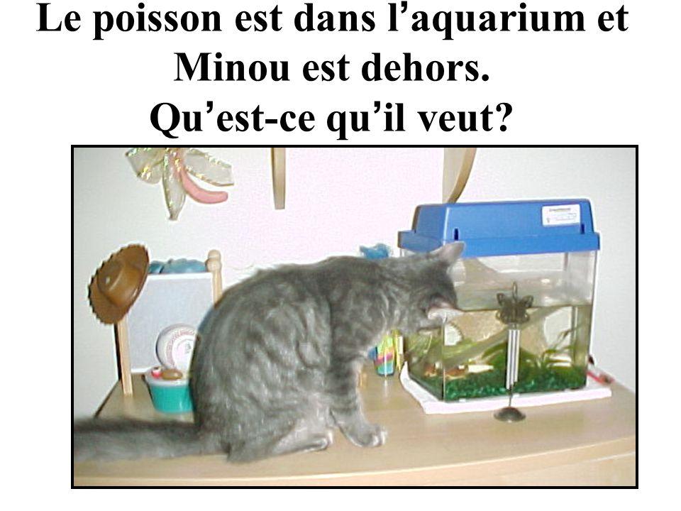 Le poisson est dans l aquarium et Minou est dehors. Qu est-ce qu il veut?