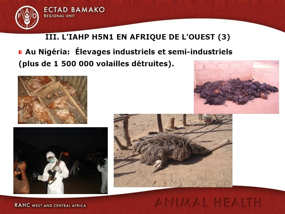 Au Nigéria: Élevages industriels et semi-industriels (plus de 1 500 000 volailles détruites). III. LIAHP H5N1 EN AFRIQUE DE LOUEST (3)