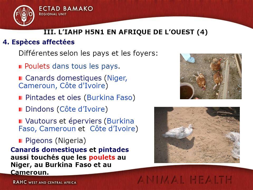 4. Espèces affectées Différentes selon les pays et les foyers: Poulets dans tous les pays. Canards domestiques (Niger, Cameroun, Côte d'Ivoire) Pintad