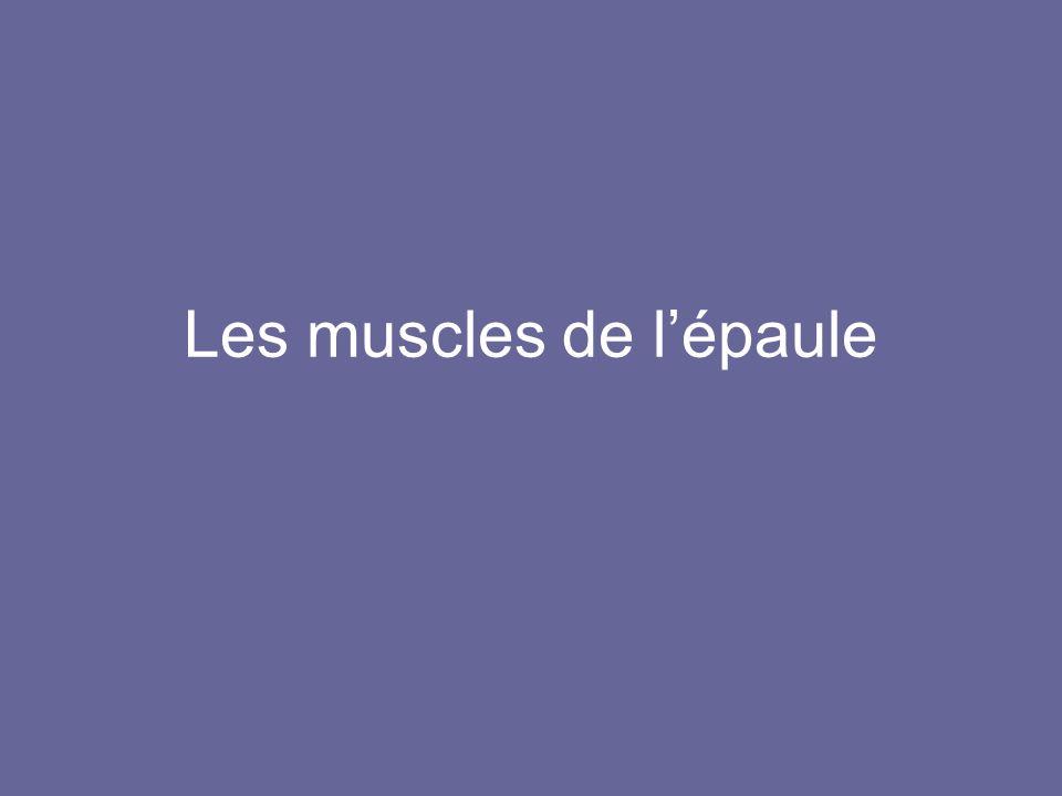 Les muscles de lépaule