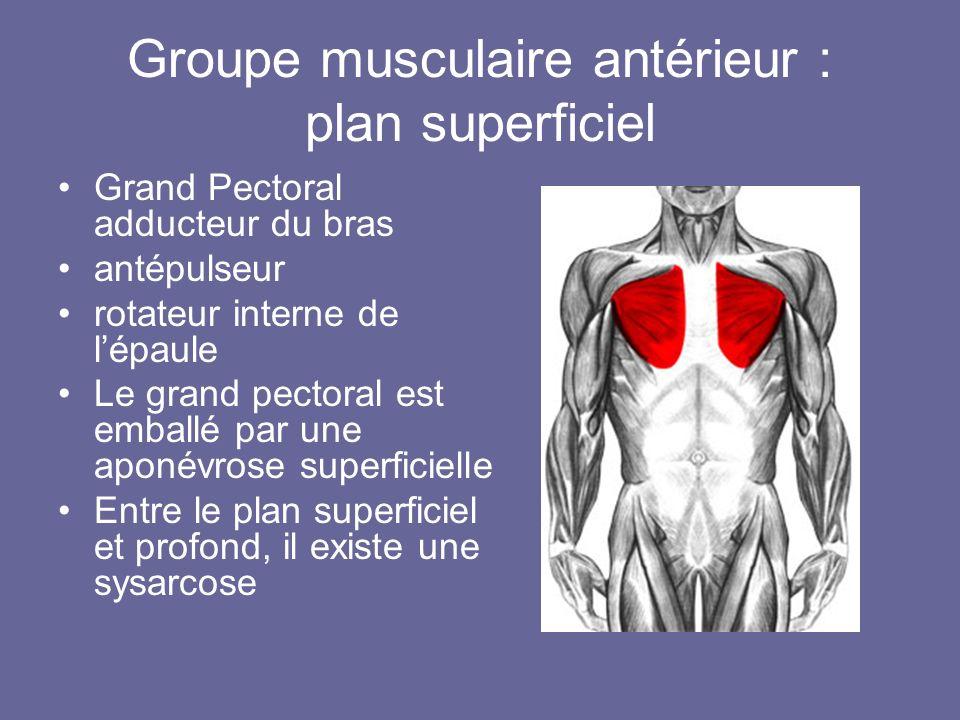Groupe musculaire antérieur : plan superficiel Grand Pectoral adducteur du bras antépulseur rotateur interne de lépaule Le grand pectoral est emballé