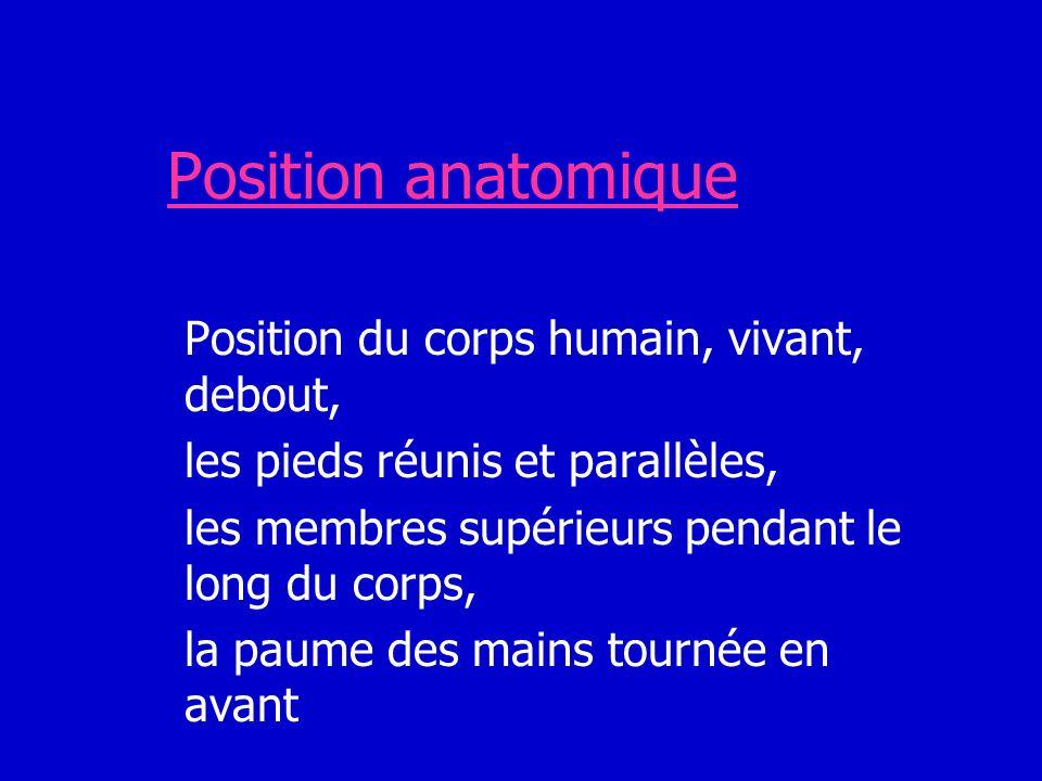 Position anatomique Position du corps humain, vivant, debout, les pieds réunis et parallèles, les membres supérieurs pendant le long du corps, la paum