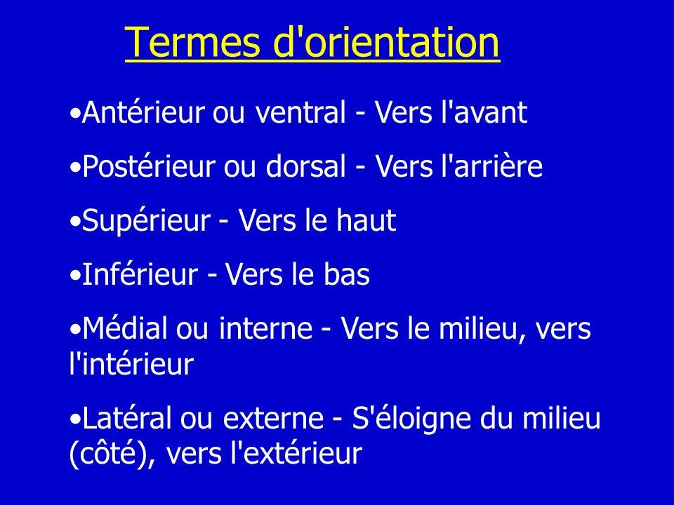 Termes d'orientation Antérieur ou ventral - Vers l'avant Postérieur ou dorsal - Vers l'arrière Supérieur - Vers le haut Inférieur - Vers le bas Médial