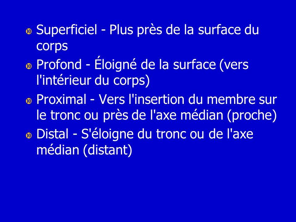 Superficiel - Plus près de la surface du corps Profond - Éloigné de la surface (vers l'intérieur du corps) Proximal - Vers l'insertion du membre sur l