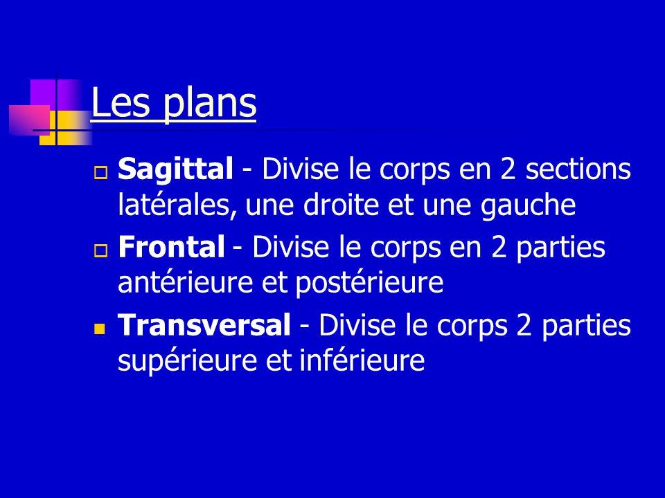 Les plans Sagittal - Divise le corps en 2 sections latérales, une droite et une gauche Frontal - Divise le corps en 2 parties antérieure et postérieur