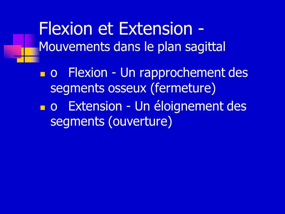 Flexion et Extension - Mouvements dans le plan sagittal oFlexion - Un rapprochement des segments osseux (fermeture) oExtension - Un éloignement des se