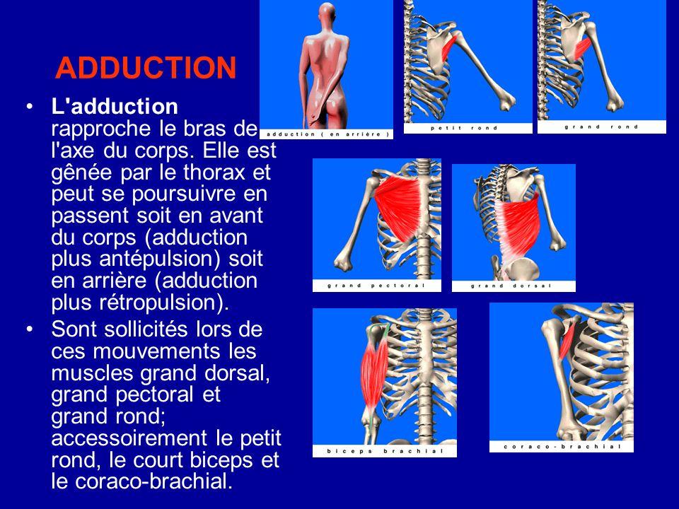 ADDUCTION L'adduction rapproche le bras de l'axe du corps. Elle est gênée par le thorax et peut se poursuivre en passent soit en avant du corps (adduc