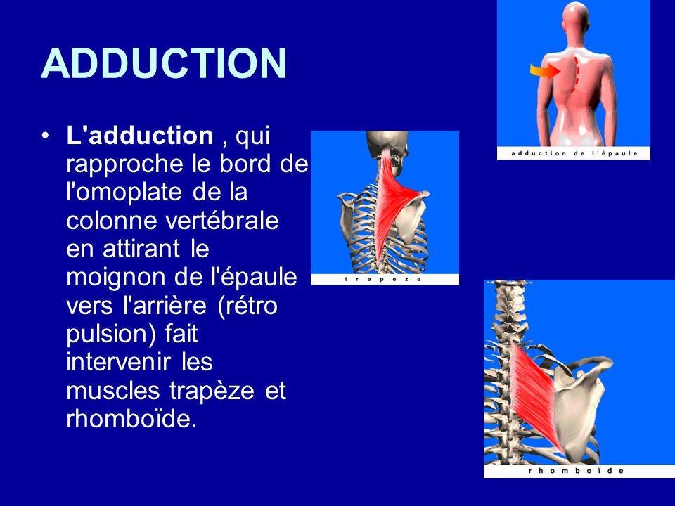 ADDUCTION L'adduction, qui rapproche le bord de l'omoplate de la colonne vertébrale en attirant le moignon de l'épaule vers l'arrière (rétro pulsion)