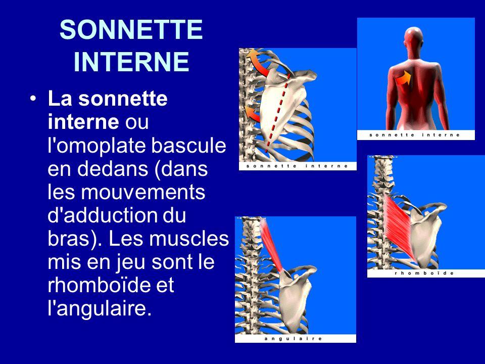 SONNETTE INTERNE La sonnette interne ou l'omoplate bascule en dedans (dans les mouvements d'adduction du bras). Les muscles mis en jeu sont le rhomboï