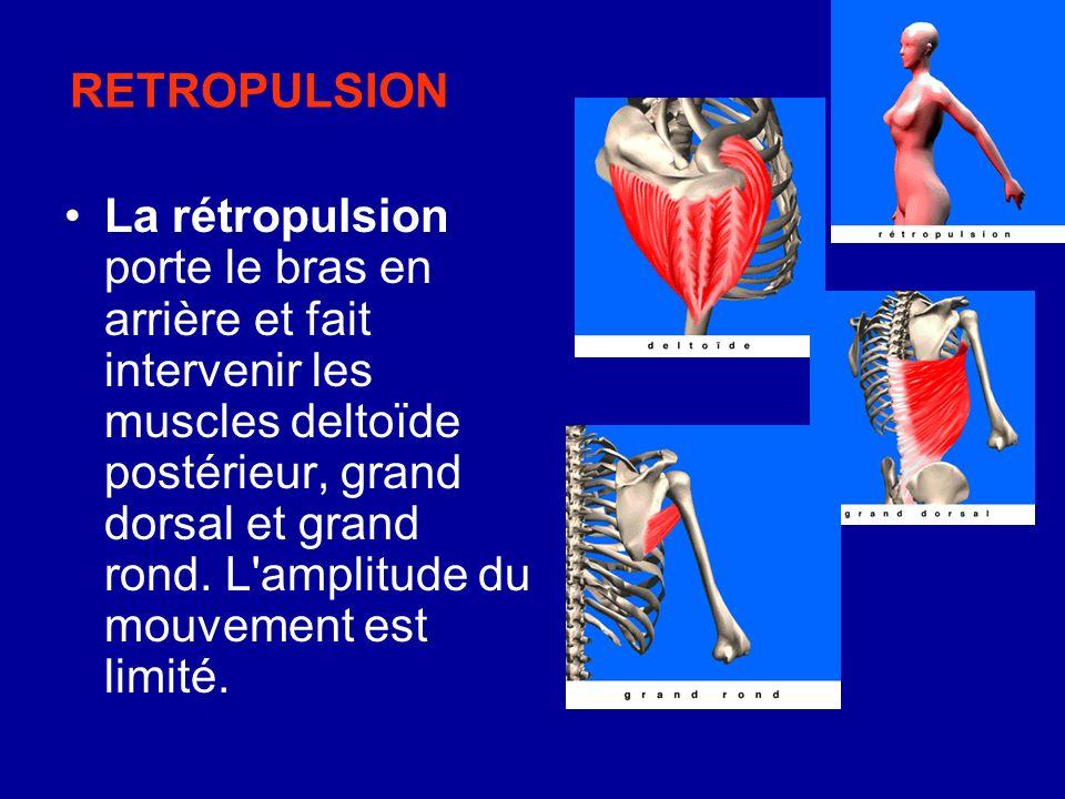 RETROPULSION La rétropulsion porte le bras en arrière et fait intervenir les muscles deltoïde postérieur, grand dorsal et grand rond. L'amplitude du m