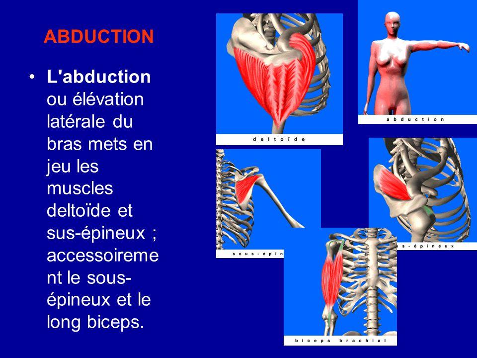 ABDUCTION L'abduction ou élévation latérale du bras mets en jeu les muscles deltoïde et sus-épineux ; accessoireme nt le sous- épineux et le long bice