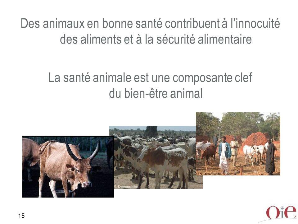 15 Des animaux en bonne santé contribuent à linnocuité des aliments et à la sécurité alimentaire La santé animale est une composante clef du bien-être