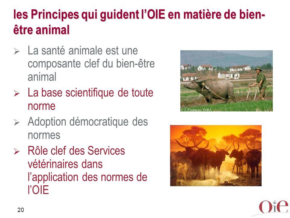 20 les Principes qui guident lOIE en matière de bien- être animal La santé animale est une composante clef du bien-être animal La base scientifique de