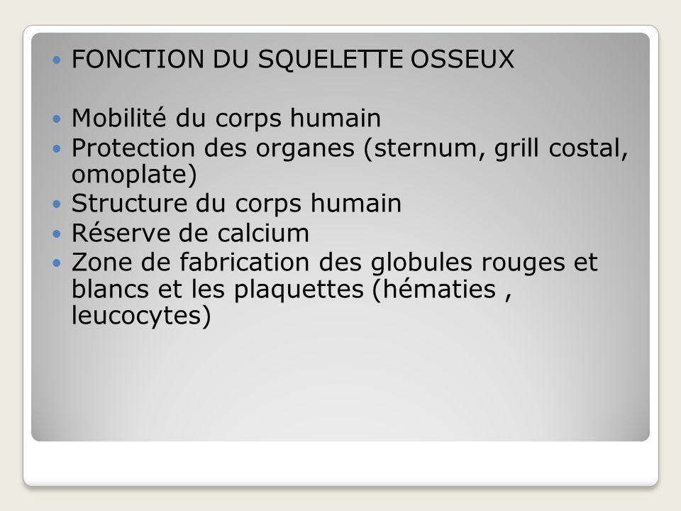 TYPES DOS: Os plats (omoplate, voute cranienne…) Os courts (vertébres…) Os longs (fémur, tibia, humérus…) Métaphyse Épiphyse diaphyse
