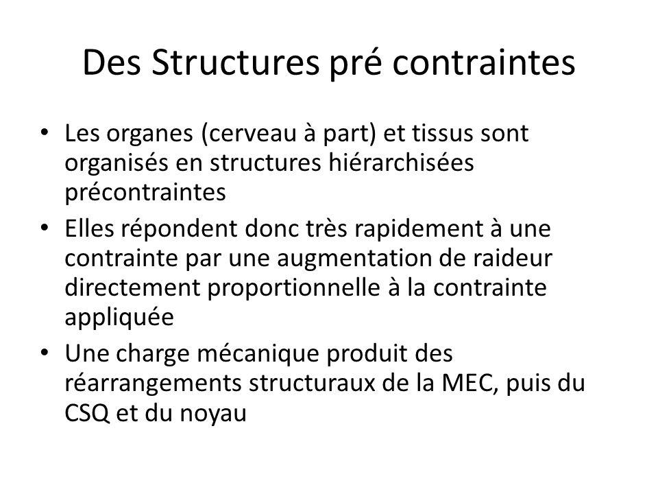 Des Structures pré contraintes Les organes (cerveau à part) et tissus sont organisés en structures hiérarchisées précontraintes Elles répondent donc t