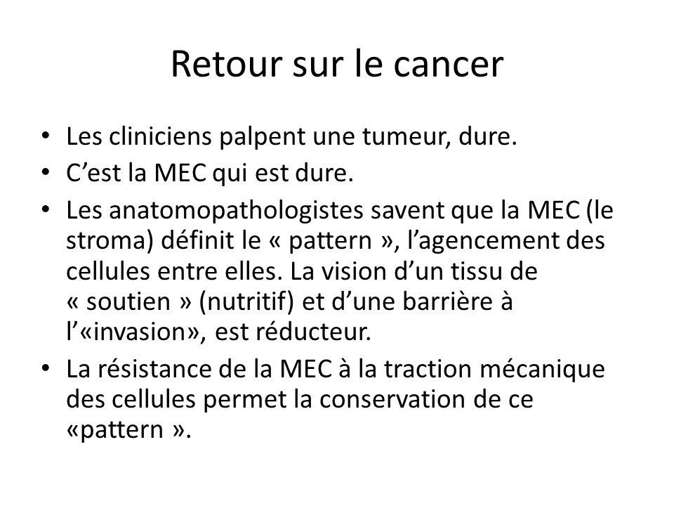 Retour sur le cancer Les cliniciens palpent une tumeur, dure. Cest la MEC qui est dure. Les anatomopathologistes savent que la MEC (le stroma) définit