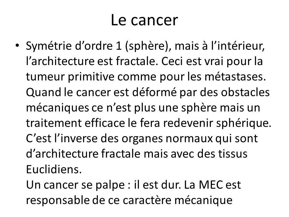 Le cancer Symétrie dordre 1 (sphère), mais à lintérieur, larchitecture est fractale. Ceci est vrai pour la tumeur primitive comme pour les métastases.