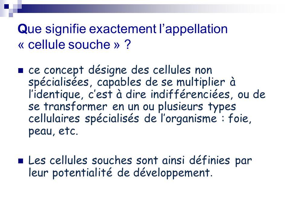 Que signifie exactement lappellation « cellule souche » ? ce concept désigne des cellules non spécialisées, capables de se multiplier à lidentique, ce