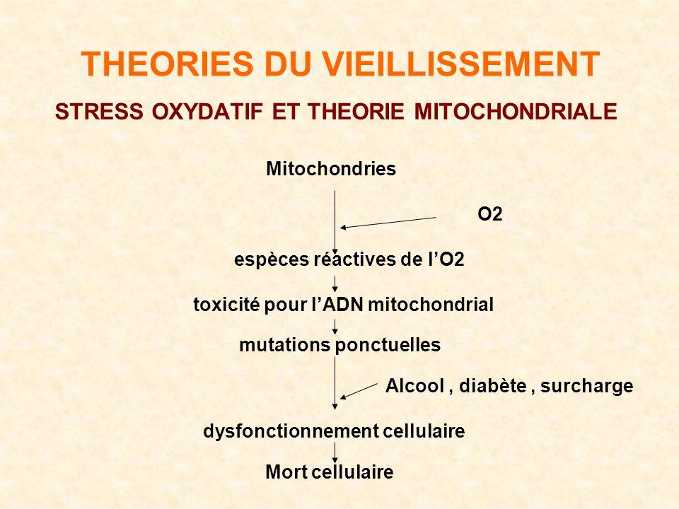 THEORIES DU VIEILLISSEMENT STRESS OXYDATIF ET THEORIE MITOCHONDRIALE Mitochondries O2 espèces réactives de lO2 toxicité pour lADN mitochondrial mutations ponctuelles Alcool, diabète, surcharge dysfonctionnement cellulaire Mort cellulaire