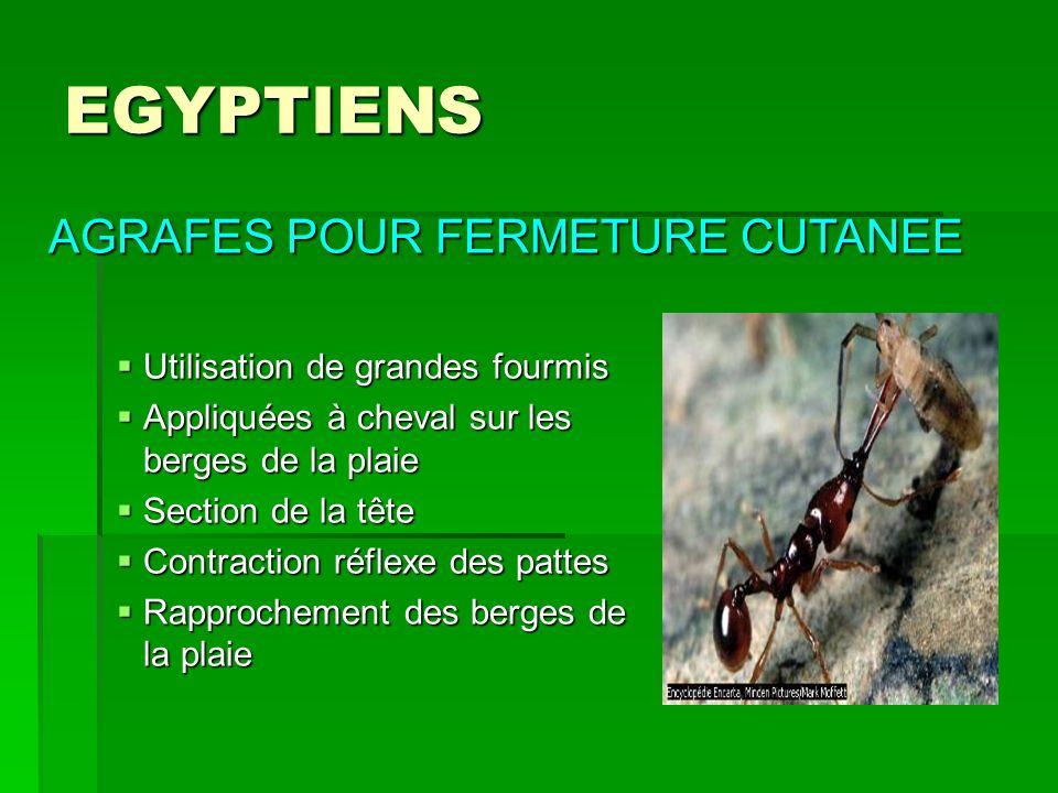 EGYPTIENS Utilisation de grandes fourmis Utilisation de grandes fourmis Appliquées à cheval sur les berges de la plaie Appliquées à cheval sur les ber