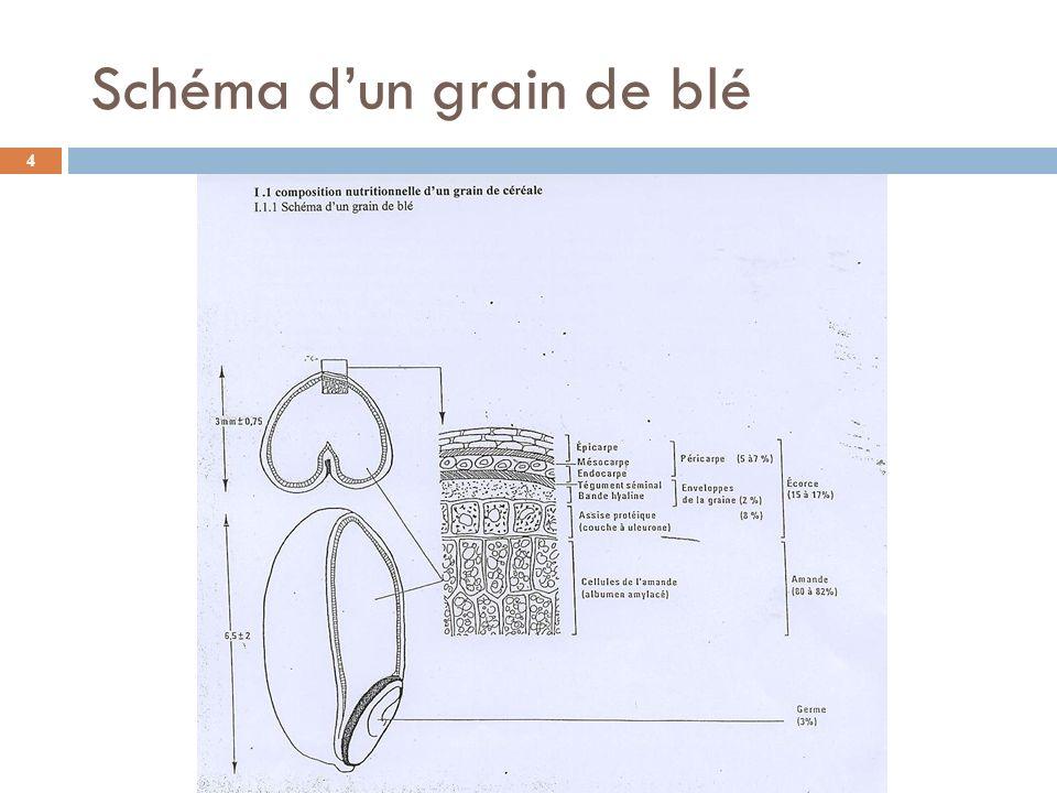 Le sarrasin Breton ou « blé noir » Sarrasin indécorticable, il ne peut être consommé en grains entiers.