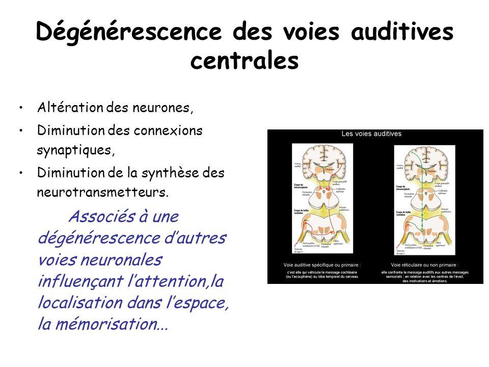 Dégénérescence des voies auditives centrales Altération des neurones, Diminution des connexions synaptiques, Diminution de la synthèse des neurotransm