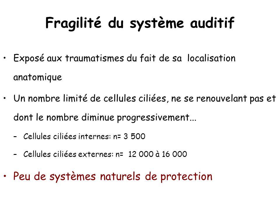 Fragilité du système auditif Exposé aux traumatismes du fait de sa localisation anatomique Un nombre limité de cellules ciliées, ne se renouvelant pas