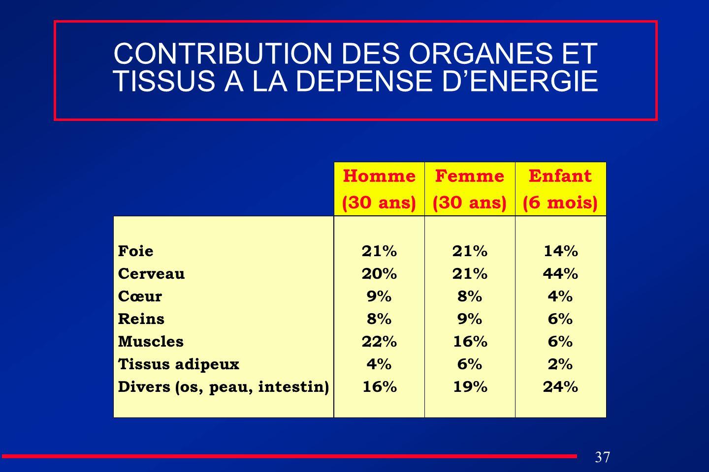 37 CONTRIBUTION DES ORGANES ET TISSUS A LA DEPENSE DENERGIE Foie Cerveau Cœur Reins Muscles Tissus adipeux Divers (os, peau, intestin) Homme (30 ans)