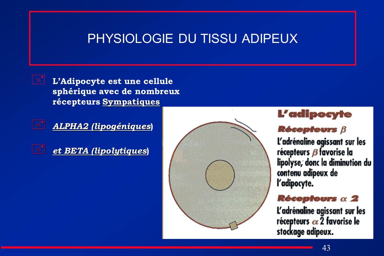 43 PHYSIOLOGIE DU TISSU ADIPEUX Sympatiques LAdipocyte est une cellule sphérique avec de nombreux récepteurs Sympatiques ALPHA2 (lipogéniques ALPHA2 (