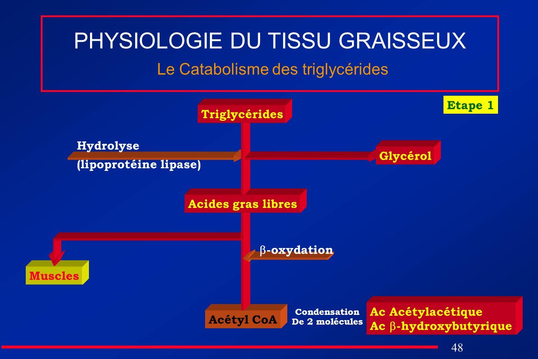 48 Muscles Acétyl CoA PHYSIOLOGIE DU TISSU GRAISSEUX Le Catabolisme des triglycérides Acides gras libres Glycérol Hydrolyse (lipoprotéine lipase) -oxy