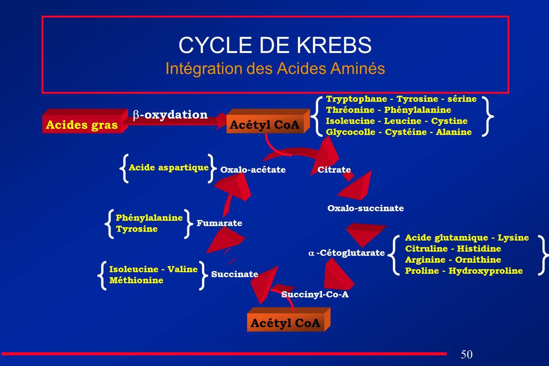 50 Acétyl CoA Acides gras CYCLE DE KREBS Intégration des Acides Aminés Citrate Oxalo-succinate Succinate Oxalo-acétate Acétyl CoA -oxydation -Cétoglut