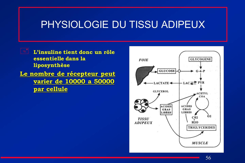 56 PHYSIOLOGIE DU TISSU ADIPEUX Linsuline tient donc un rôle essentielle dans la liposynthèse Le nombre de récepteur peut varier de 10000 a 50000 par