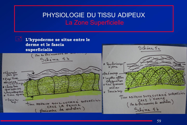 59 PHYSIOLOGIE DU TISSU ADIPEUX La Zone Superficielle Lhypoderme se situe entre le derme et le fascia superficialis