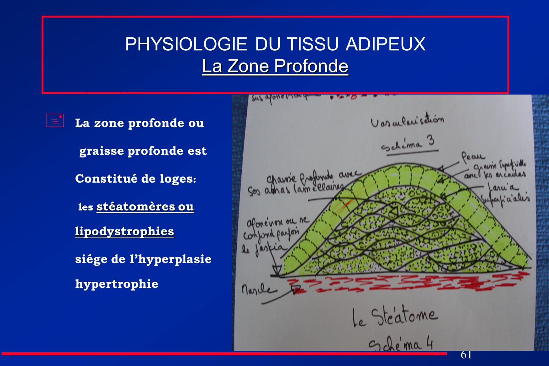 61 La Zone Profonde PHYSIOLOGIE DU TISSU ADIPEUX La Zone Profonde La zone profonde ou graisse profonde est Constitué de loges : stéatomères ou lipodys