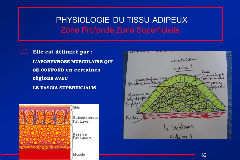 62 PHYSIOLOGIE DU TISSU ADIPEUX Zone Profonde Zone Superficielle Elle est délimité par : LAPONEVROSE MUSCULAIRE QUI SE CONFOND en certaines régions AV