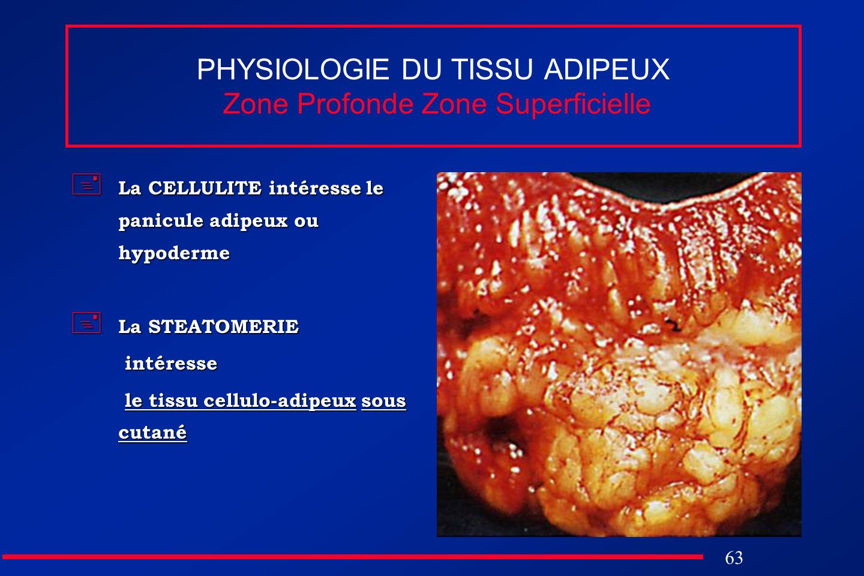 63 PHYSIOLOGIE DU TISSU ADIPEUX Zone Profonde Zone Superficielle La CELLULITE intéresse le panicule adipeux ou hypoderme La CELLULITE intéresse le pan