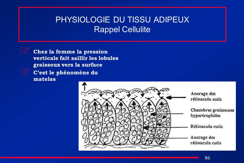 86 PHYSIOLOGIE DU TISSU ADIPEUX Rappel Cellulite Chez la femme la pression verticale fait saillir les lobules graisseux vers la surface Cest le phénom