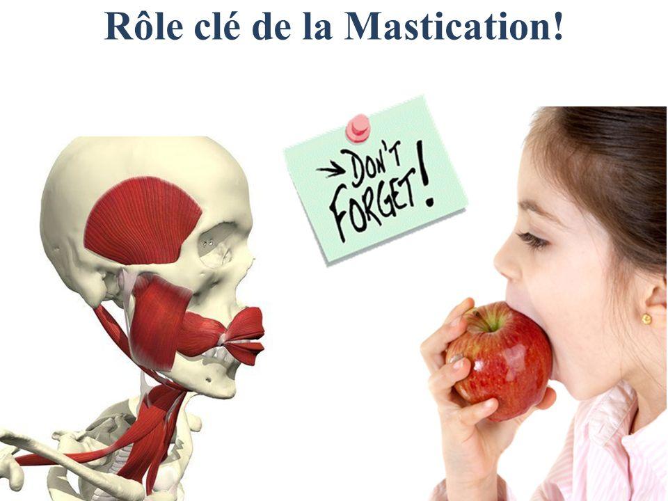 Rôle clé de la Mastication!