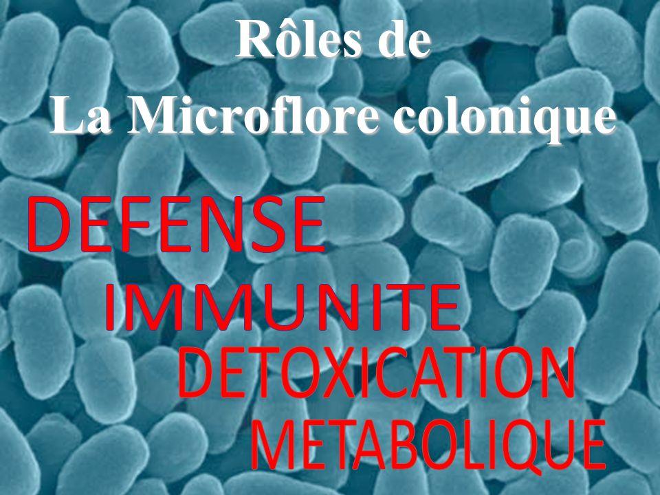 Rôles de La Microflore colonique
