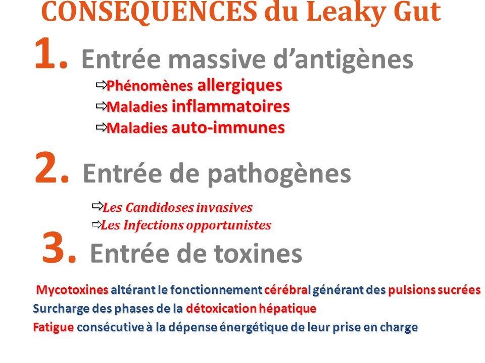 CONSEQUENCES du Leaky Gut 1. Entrée massive dantigènes Phénomènes allergiques Phénomènes allergiques Maladies inflammatoires Maladies inflammatoires M