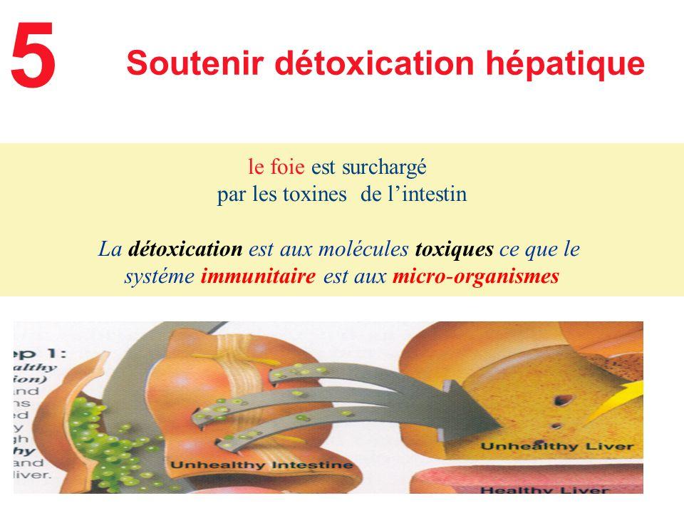 le foie est surchargé par les toxines de lintestin La détoxication est aux molécules toxiques ce que le systéme immunitaire est aux micro-organismes S