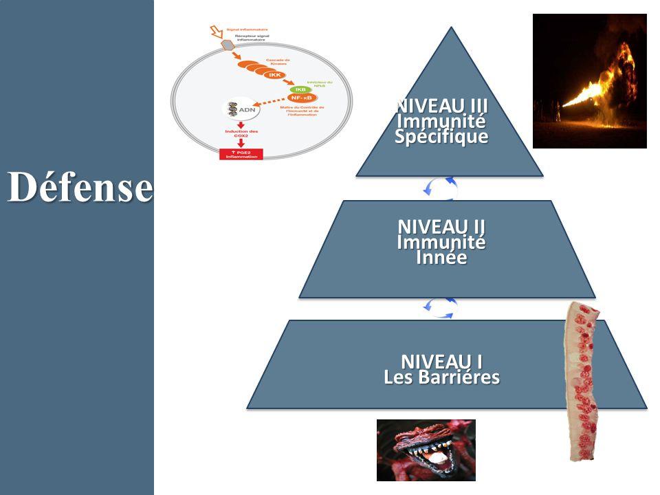 Défense NIVEAU I Les Barriéres NIVEAU II Immunité Innée NIVEAU III Immunité Spécifique