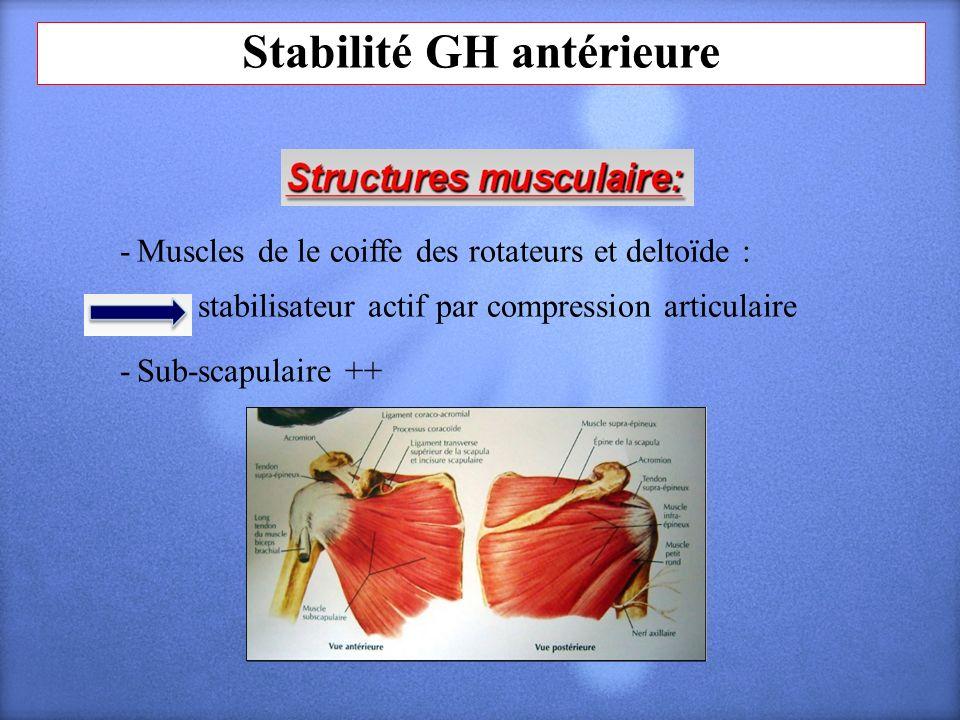 Stabilité GH antérieure - Muscles de le coiffe des rotateurs et deltoïde : stabilisateur actif par compression articulaire - Sub-scapulaire ++