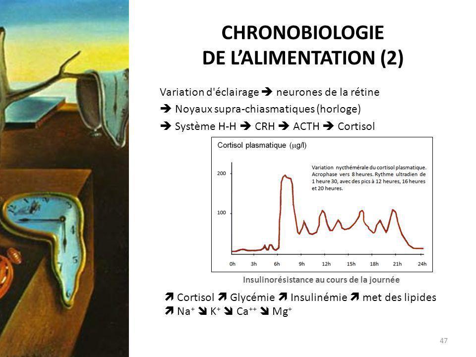 CHRONOBIOLOGIE DE LALIMENTATION (2) Variation d'éclairage neurones de la rétine Noyaux supra-chiasmatiques (horloge) Système H-H CRH ACTH Cortisol Ins