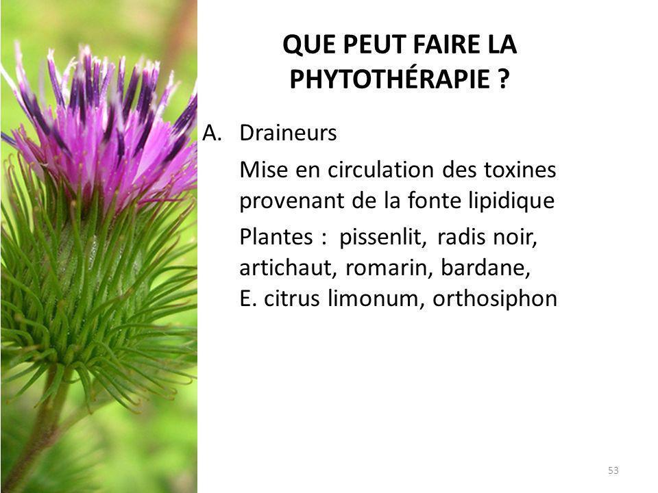 QUE PEUT FAIRE LA PHYTOTHÉRAPIE ? A. Draineurs Mise en circulation des toxines provenant de la fonte lipidique Plantes : pissenlit, radis noir, artich