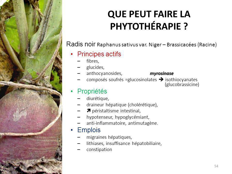 QUE PEUT FAIRE LA PHYTOTHÉRAPIE ? Radis noir Raphanus sativus var. Niger – Brassicacées (Racine) Principes actifs – fibres, – glucides, myrosinase – a