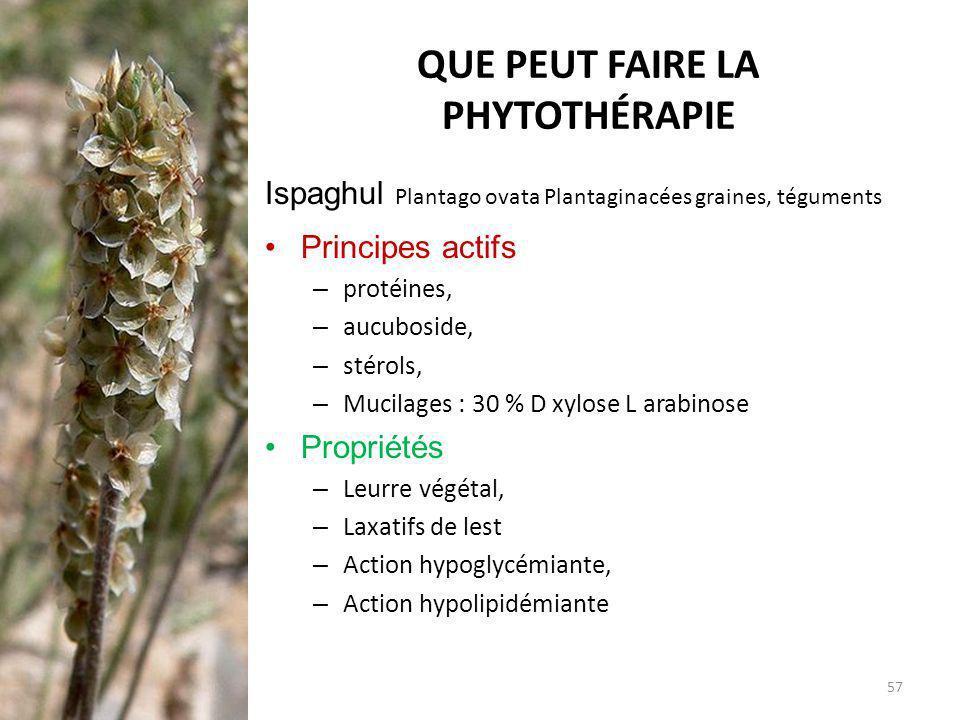 QUE PEUT FAIRE LA PHYTOTHÉRAPIE Ispaghul Plantago ovata Plantaginacées graines, téguments Principes actifs – protéines, – aucuboside, – stérols, – Muc